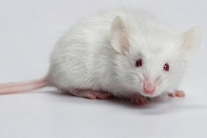 Mice and Rats Control Service